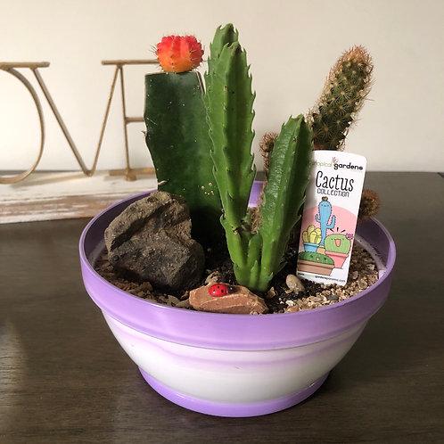 Mini jardines de Cactus