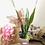 Thumbnail: Conjunto de plantas Día de la Madre