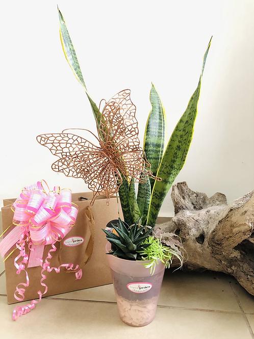 Conjunto de plantas Día de la Madre