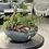 Thumbnail: Centro de mesa con Helecho y Episcia, 50cm