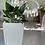 Thumbnail: Spathiphyllum (Cala)