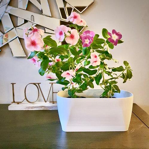 Maceta Living Flowerbox + S. 30cm