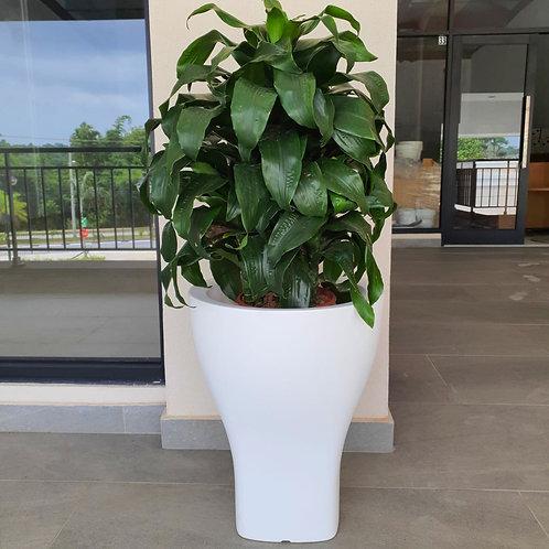 Maceta Domus 48x60 cm