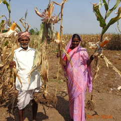 Sustainable AgricilturePractices in Dryland Crops