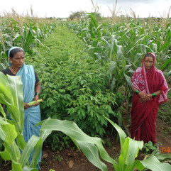 Diversity Promotion through Sustainable Agriculture