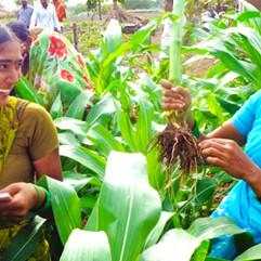 Empowering Women through Field Schools