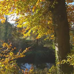 Autumn on the towpath