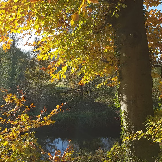 Autumn on the towpath