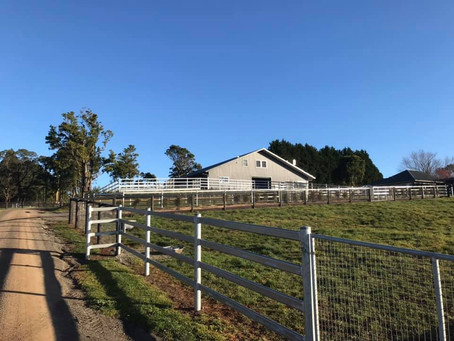 Cardross is finished! New foaling farm for Milburn