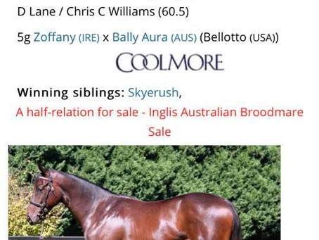 Breednet - Lot 192 2016 Inglis Australian Easter Yearling Sales