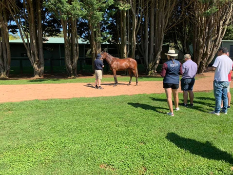 Our Melbourne Premier Yearlings having their first parade today for Inglis! 🐎☀️