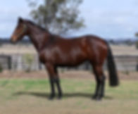 Lot 585 Calamity in foal to No Nay Never