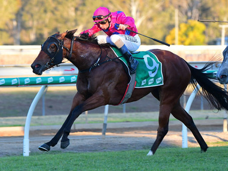 Zoustar's Latest Stakes-Winner For Sale