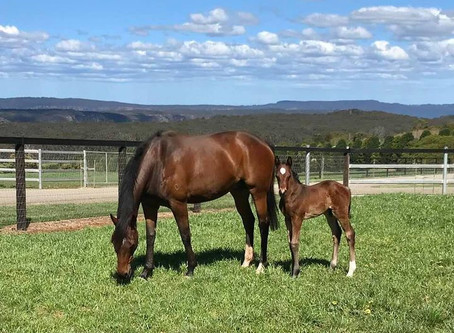 Shadow Watch and her Fastnet Rock Colt