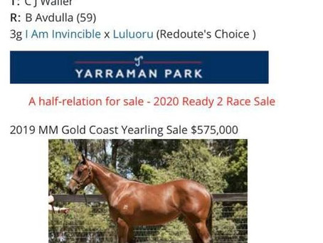 Milburn Bred and Sold Magic Millions January Sale!
