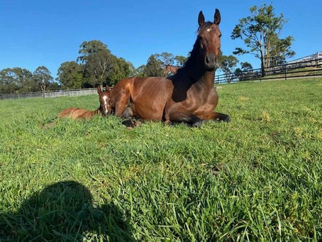 Great Day for a rest (Soft Kiss and Foal)