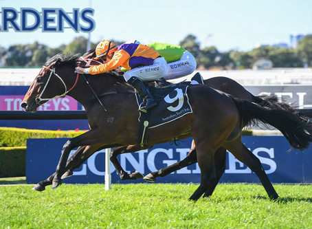 Million Dollar Snitzel Colt Spend Makes Winning Debut