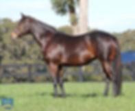 Lot 610 Cool Trade in foal Deep Field LS