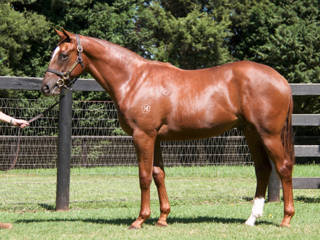 Pedigree Boosters – Inglis Easter Sale