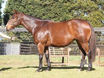 Lot 541 Arabian Beauty in Foal to Rubick