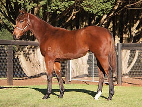 Lot 920 No Nay Never  Rock Candy Filly.j