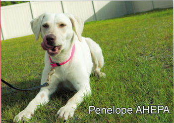 Penelope-in-training-May-2018.png
