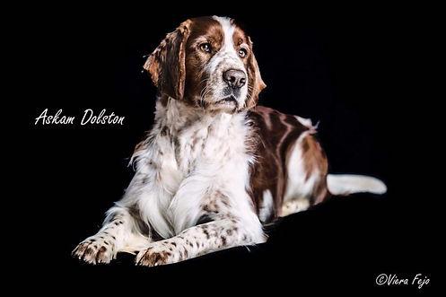 psí fotograf Senec