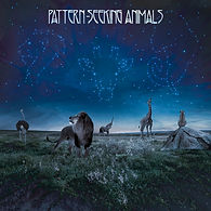 Pattern-Seeing Animals debut album