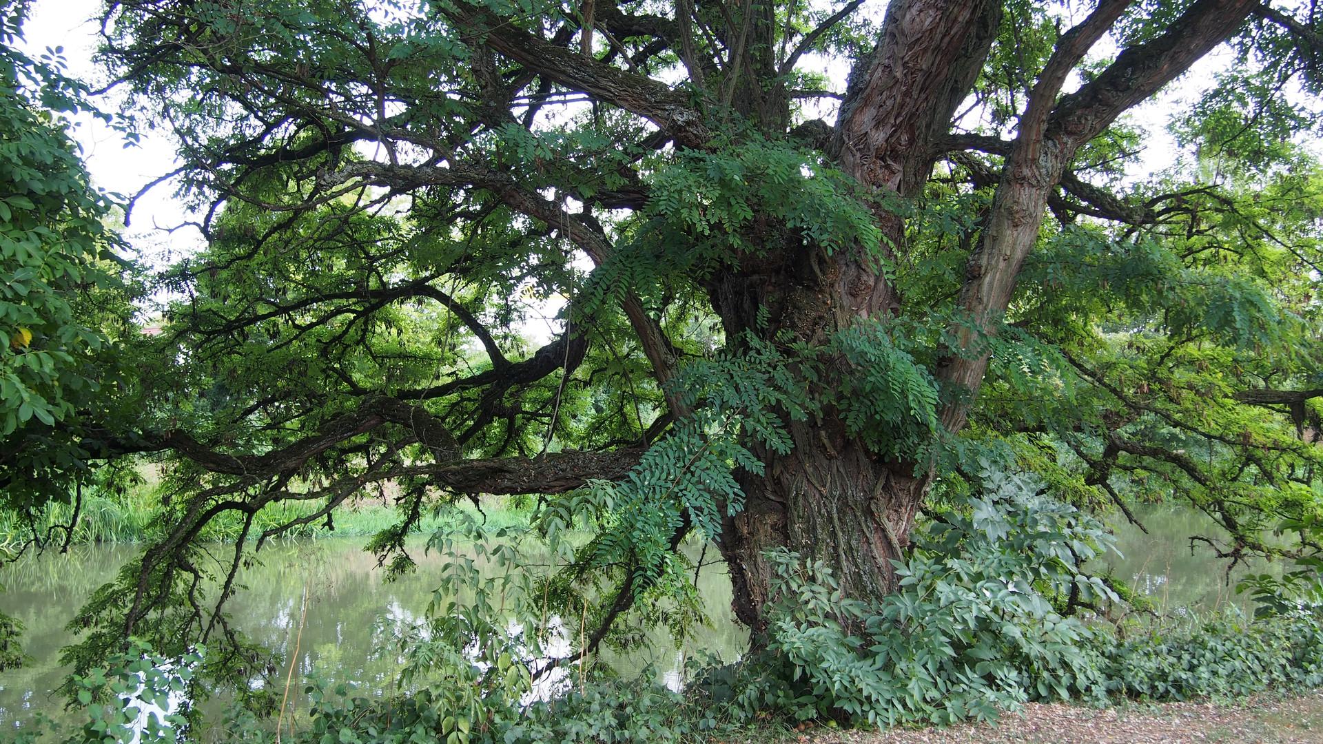 Der Baum als Kraftquelle