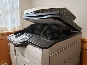Rapino and the Photocopier.jpg