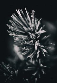 murmurs pine_4.jpg