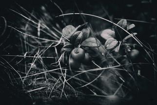 murmurs lowberry dark_6.jpg