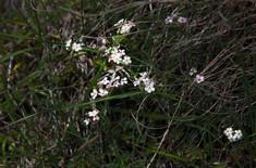 harlauta_georgia_flora_08.jpg
