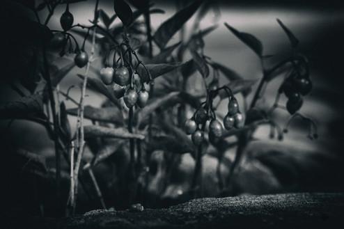 murmurs lowberry dark_1.jpg