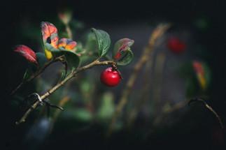 murmurs lowberry_2.jpg