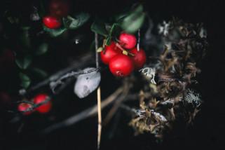 murmurs lowberry_5.jpg
