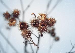 Январские цветы.jpg