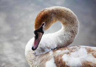 лебеди_11.jpg