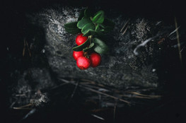 murmurs lowberry_1.jpg