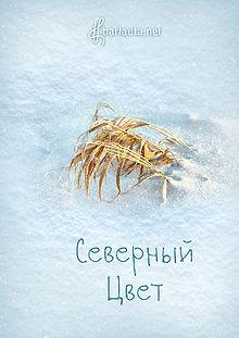 Никита Харлаута Фото Северный Цвет