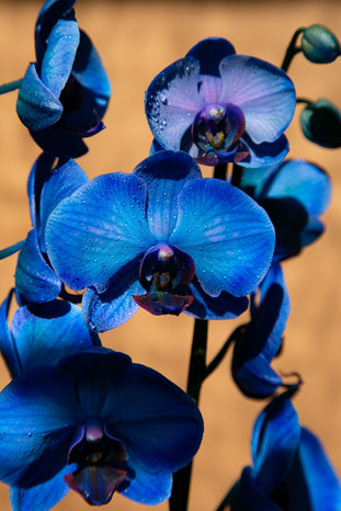 Blue is a warm color - 01.jpg
