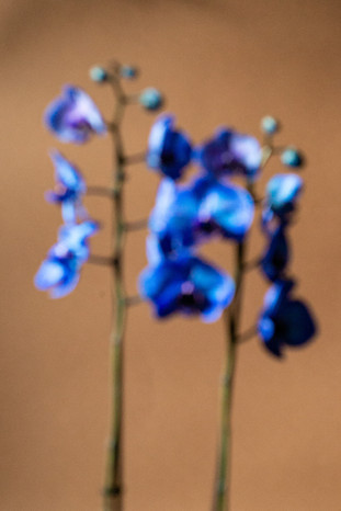 Blue is a warm color - 022.jpg
