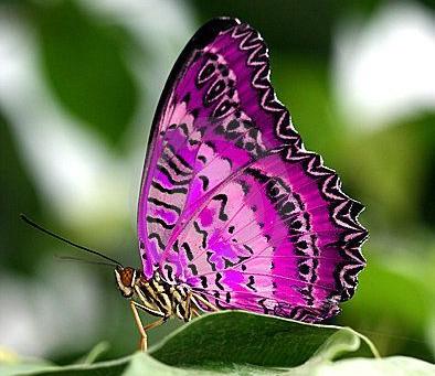 Exégèse du Vol du Papillon