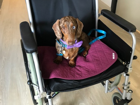 Henry Supports at Nursing Home