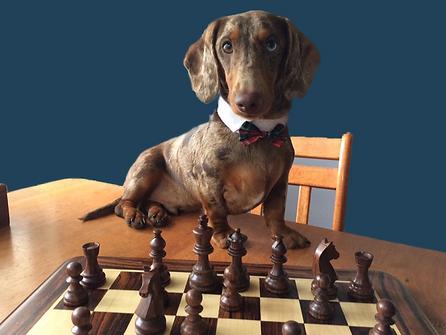 therapy dog brisbane