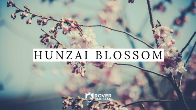 Hunzai Blossom 1.png