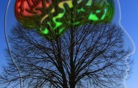 Kazanan Bir Kurum İçin Ekolojik Zeka ve Nöro-İktisat Şart