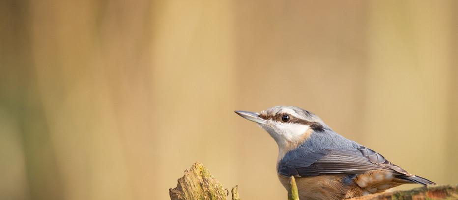 Bird Watching by Paul Bond