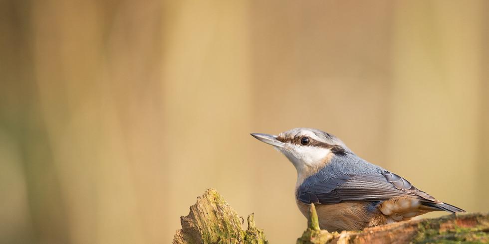 Dawn Chorus Bird Song Walk (+ breakfast)