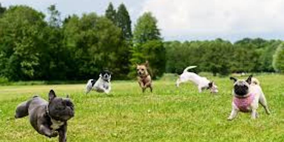 McEuen Dog Park Day